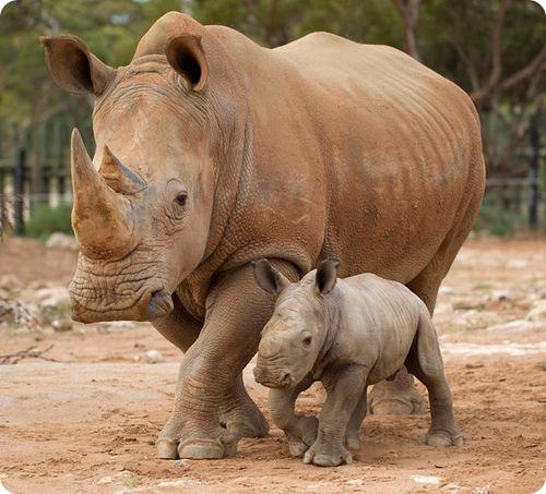 Пятьдесят килограммов радости из зоопарка Монарто
