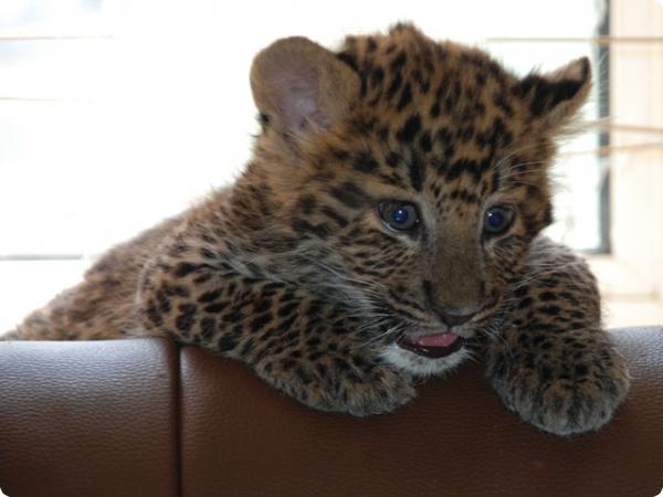 Будущие звёзды  гаагского зоопарка