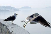 В Хельсинки чайкам «урежут» пространство