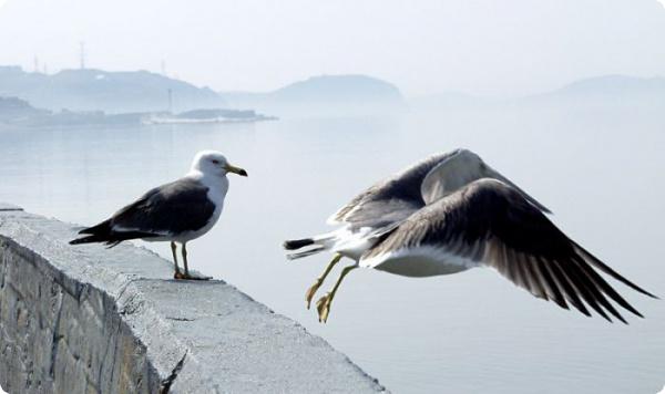 В Хельсинки чайкам
