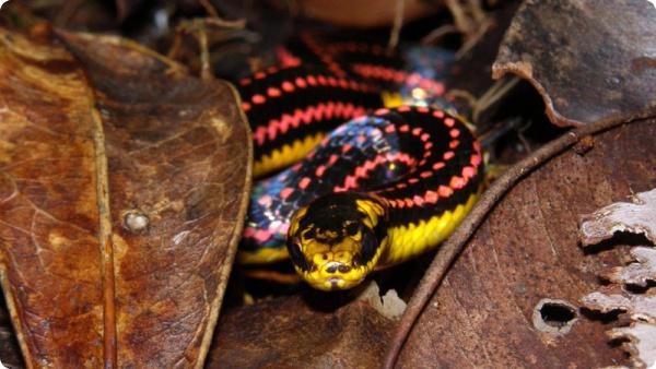 Змея Паттона
