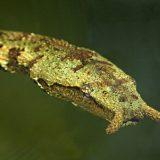 Герпетон, или щупальценосная змея