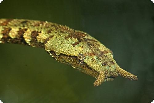 Щупальценосная змея