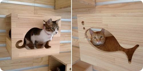 Тренажер для котов-скалолазов