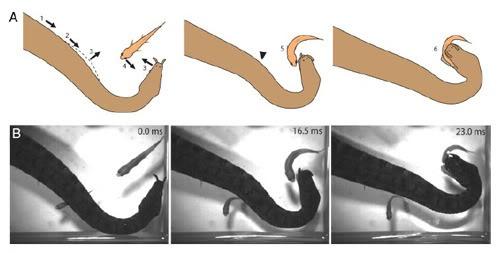 Как сделать ловушку на змею