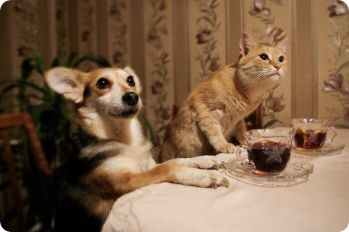 Как кошка с собакой – Подборка 18
