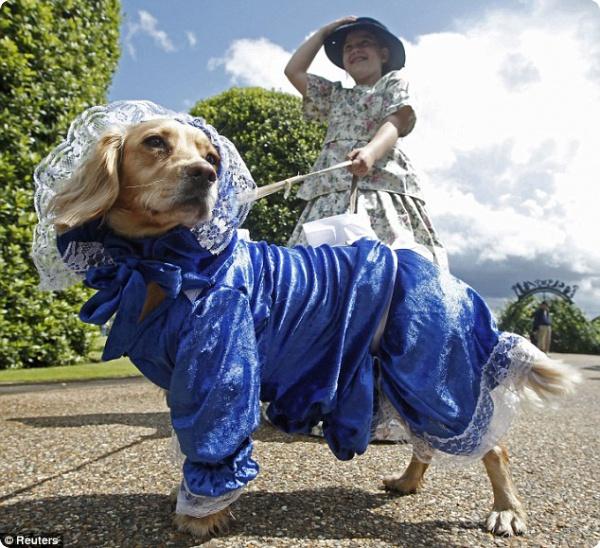 Собаки Викторианской эпохи
