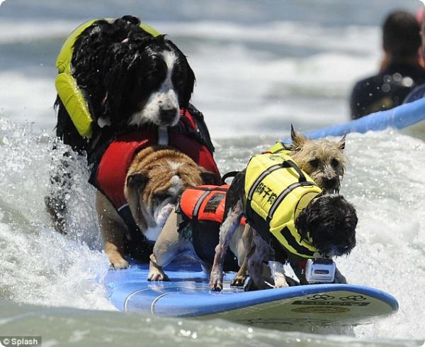 Удивительные собаки, покоряющие волны!