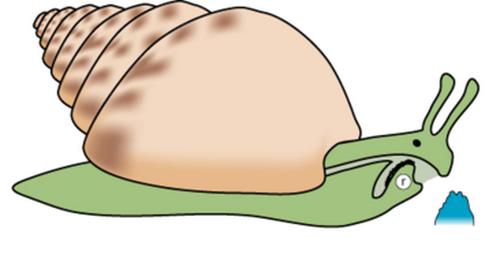 Как едят улитки