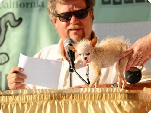Самая уродливая собака 2011