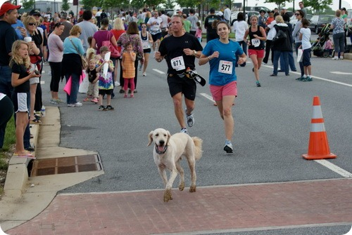 Доузер – пес-марафонец