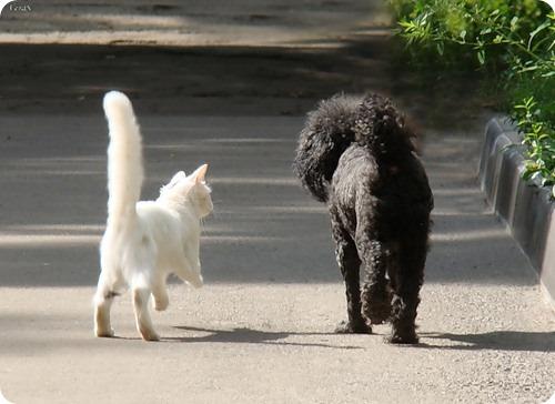 Как кошка с собакой – Подборка 20