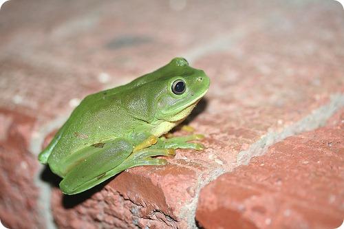 Лягушки способны выводить предметы из организма