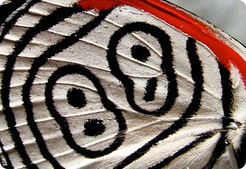 Бабочка восемьдесят восемь