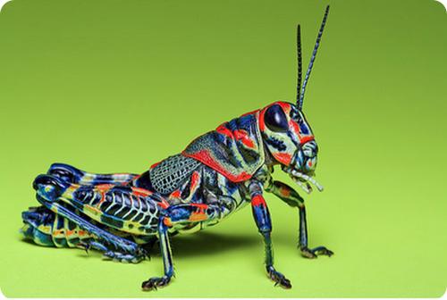 Эволюция насекомых