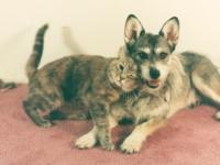 """Джинни — Собака со званием """"Почётная кошка"""""""