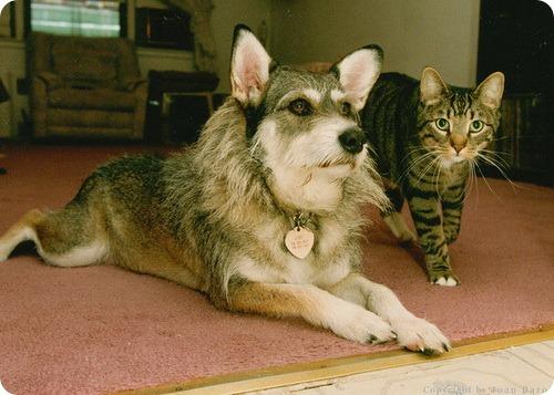 Джинни - Собака удостоившееся звания Почётная кошка
