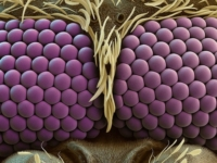 Взглянуть в глаза комару