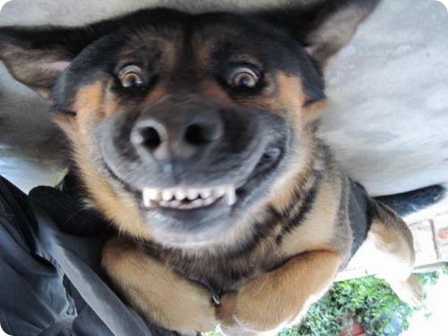 Собаки различают близнецов лучше ДНК-тестов