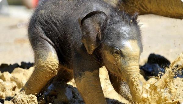 Новая звезда к столетию мюнхенского зоопарка