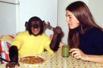 Проект Ним — из шимпанзе в человека…