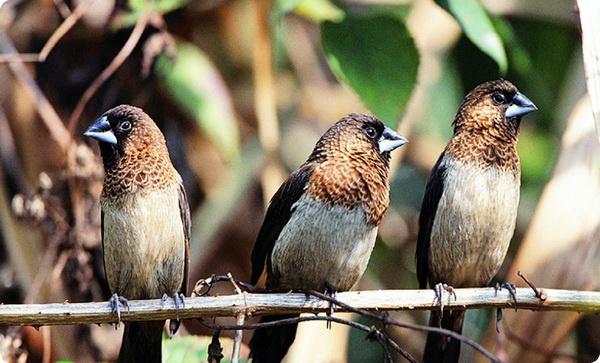 Грамматические правила птичьего языка