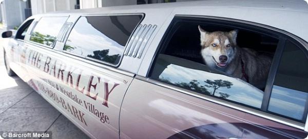 The Barkley - отель для изысканных собак