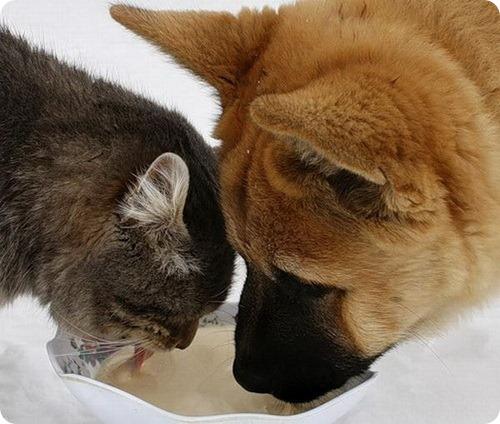 Как кошка с собакой – Подборка 19