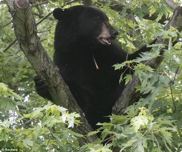 Медведь-путешественник