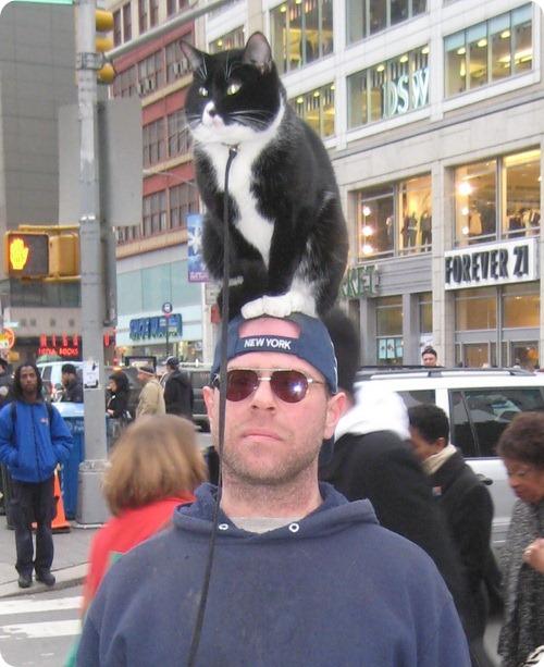 С котом на голове