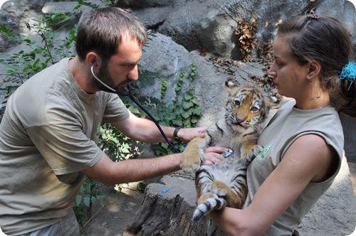 Полосатое пополнение в зоопарке Будапешта