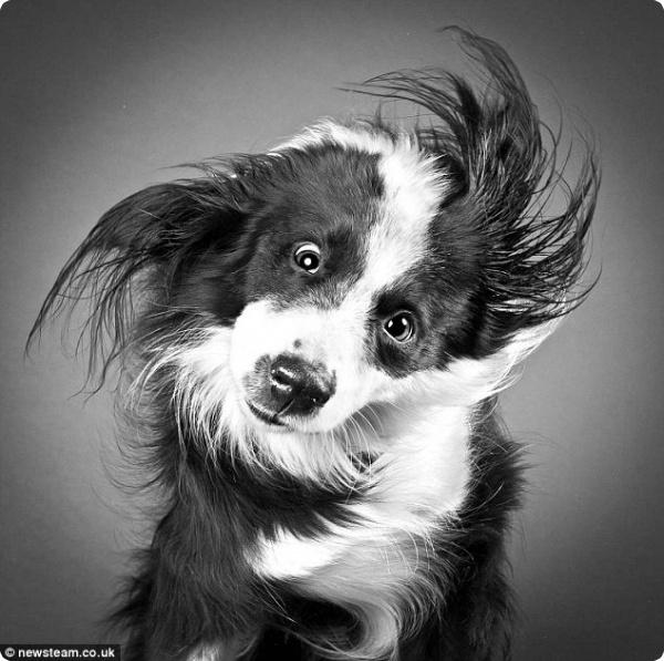 Как отряхиваются собаки?