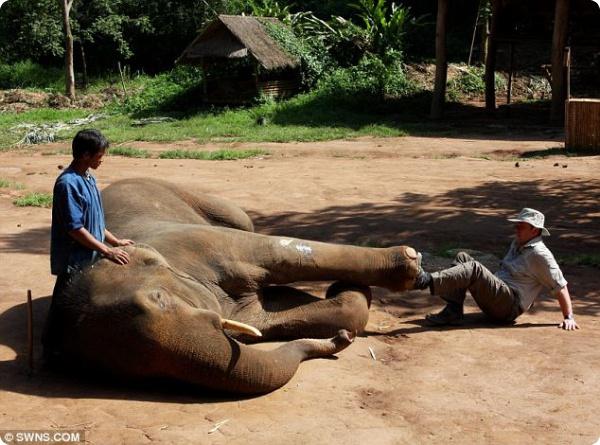 Мануальная терапия для слонов