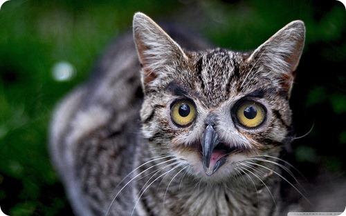 Кошки с совиными мордахами