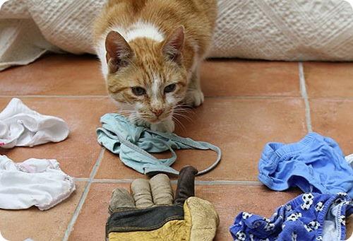 Коты-воришки: Оскар