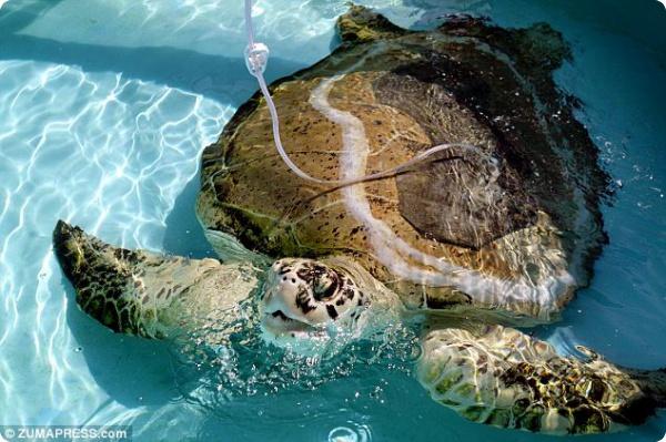 Новый панцирь для морской черепахи