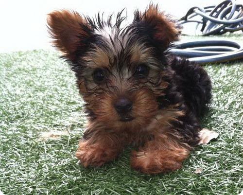 Оззи Осборн приобрел бездомного щенка за $10 тысяч