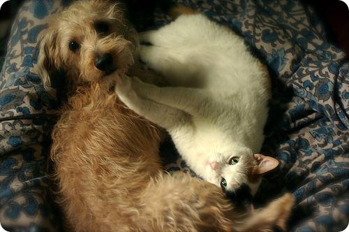 Как кошка с собакой – Подборка 21