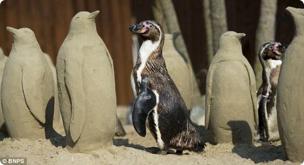 Одураченные пингвины