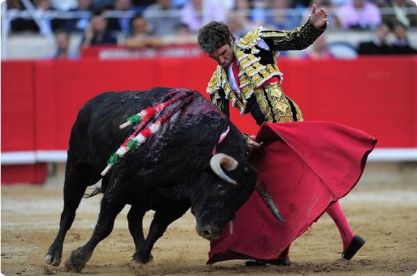 Последний бой быков