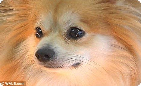 Собака ювелира знает вкус бриллиантов