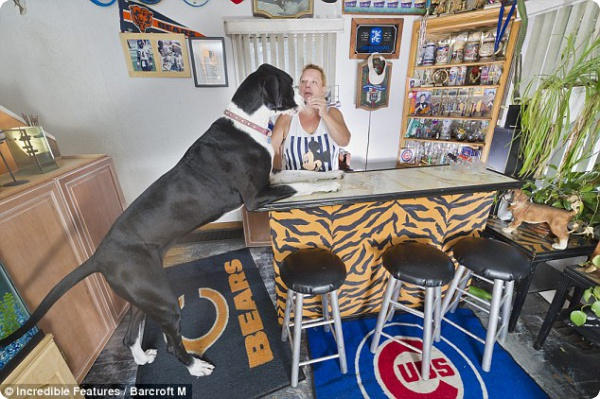 Самая высокая собака в мире!