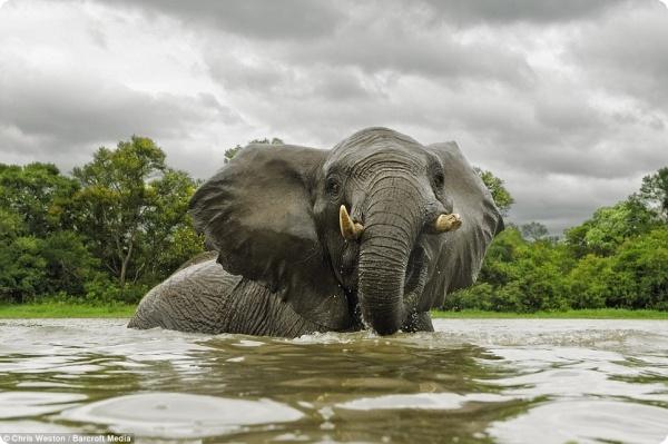 Фотографируя слонов...