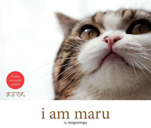 Автобиография самого известного кота в сети издана на английском