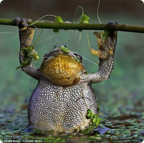 Зарядка для лягушки