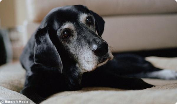 Собаки, ставшие героями 11 сентября…