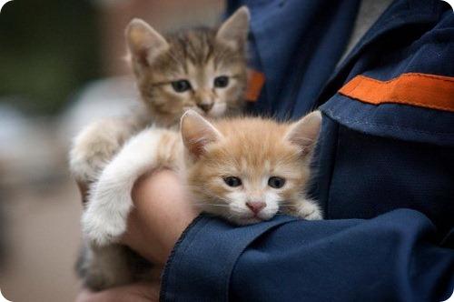 Помощь бездомным животным в Уфе