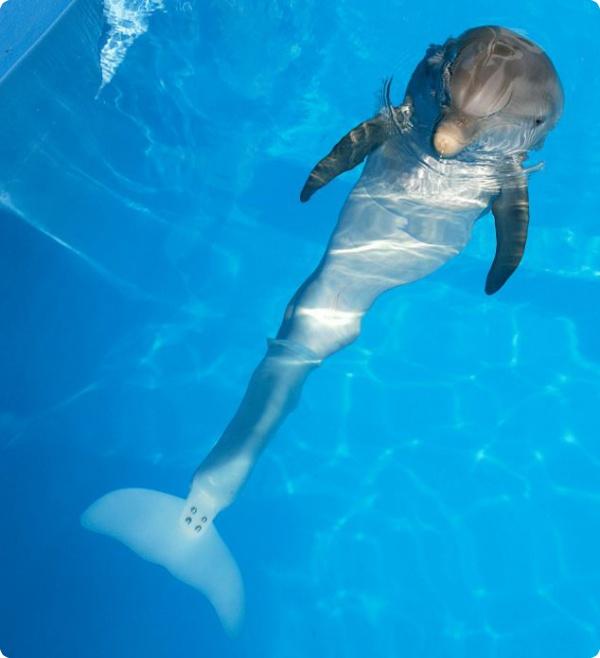 Хвост для дельфина