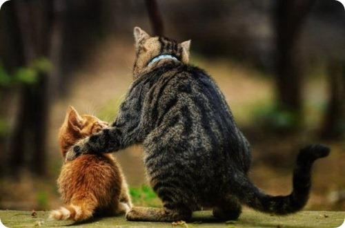 почему о котах