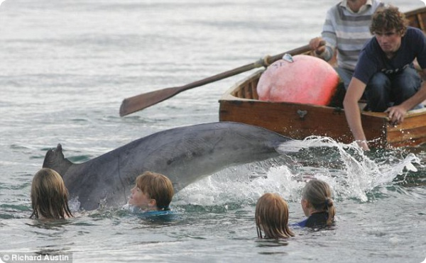 Дельфин Джордж побывал у берегов Англии
